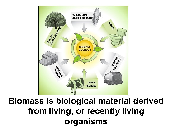 Biomass is biological material derived from living, or recently living organisms