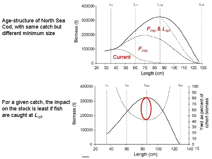 Age-structure of North Sea Cod, with same catch but different minimum size Fmsy &