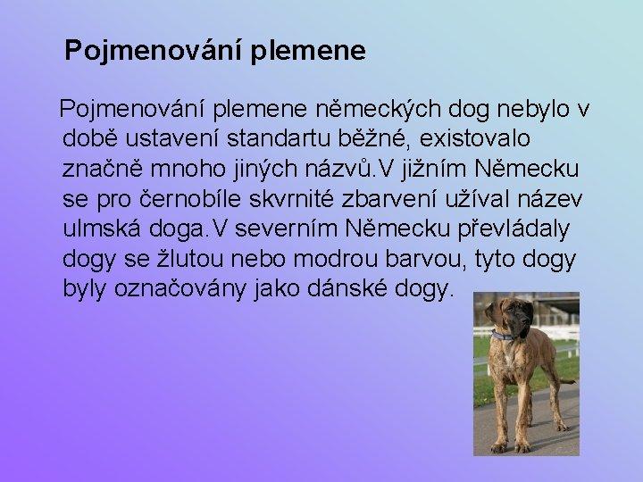 Pojmenování plemene německých dog nebylo v době ustavení standartu běžné, existovalo značně mnoho jiných