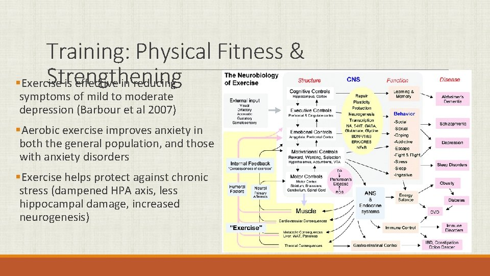 Training: Physical Fitness & Strengthening §Exercise is effective in reducing symptoms of mild to