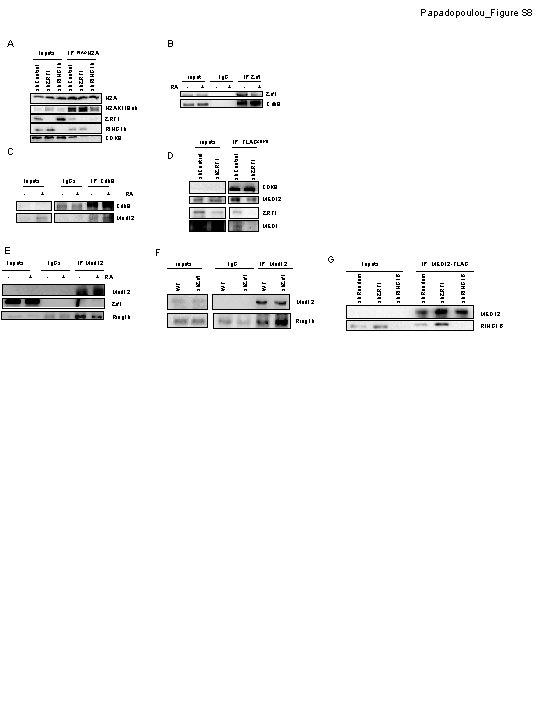 Papadopoulou_Figure S 8 A B sh. RING 1 b sh. Control sh. ZRF 1