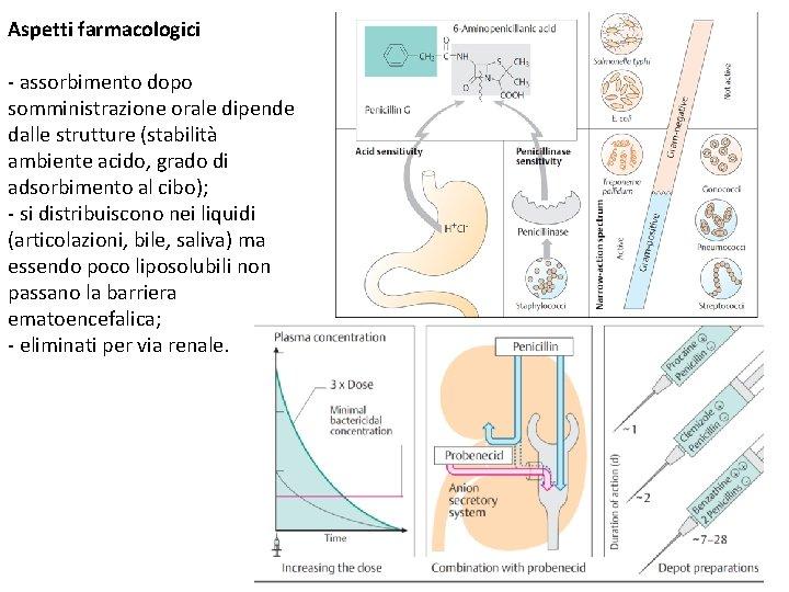 Aspetti farmacologici - assorbimento dopo somministrazione orale dipende dalle strutture (stabilità ambiente acido, grado