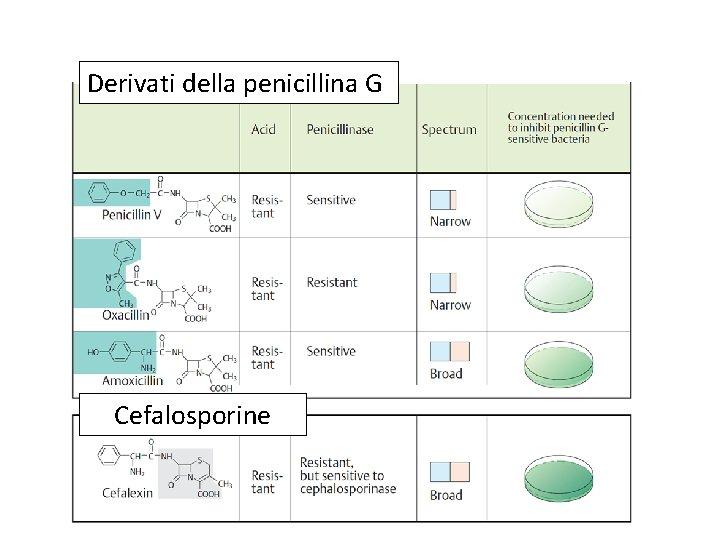 Derivati della penicillina G Cefalosporine