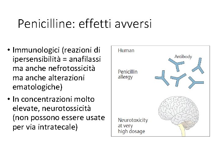 Penicilline: effetti avversi • Immunologici (reazioni di ipersensibilità = anafilassi ma anche nefrotossicità ma