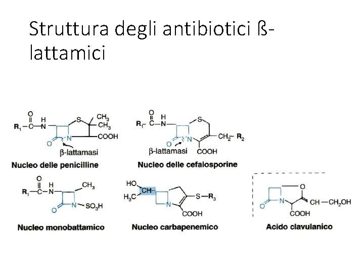 Struttura degli antibiotici ßlattamici