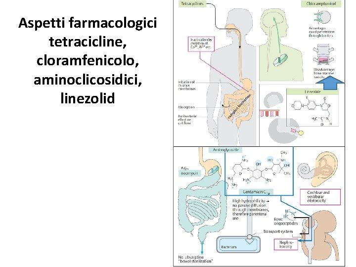 Aspetti farmacologici tetracicline, cloramfenicolo, aminoclicosidici, linezolid