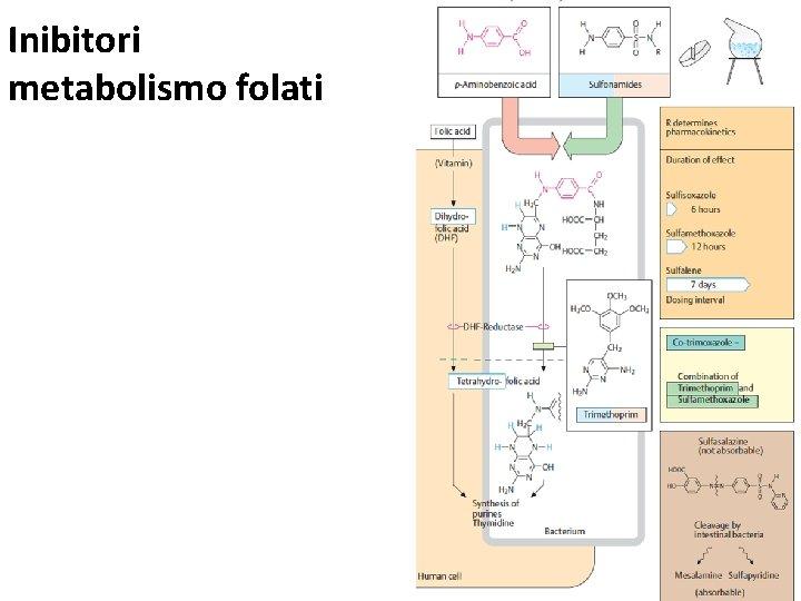 Inibitori metabolismo folati