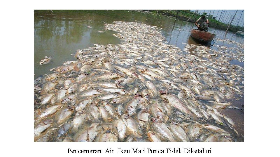 Pencemaran Air Ikan Mati Punca Tidak Diketahui