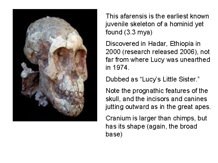 This afarensis is the earliest known juvenile skeleton of a hominid yet found (3.
