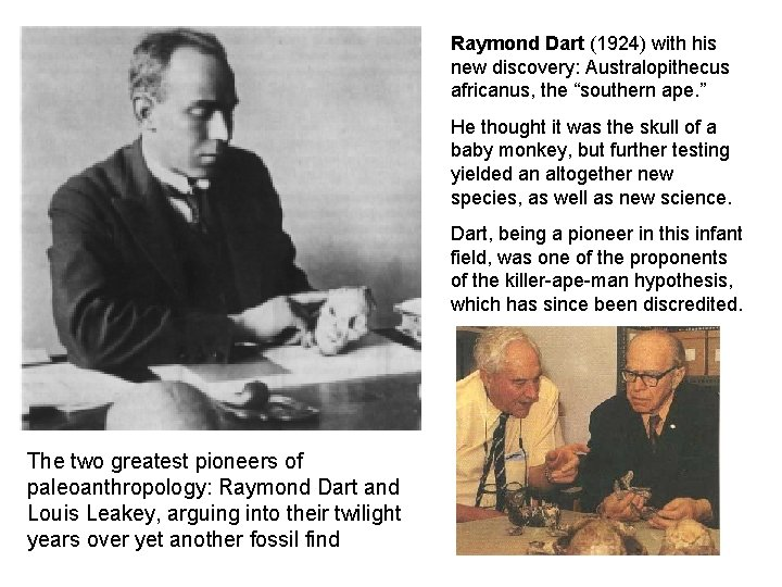 """Raymond Dart (1924) with his new discovery: Australopithecus africanus, the """"southern ape. """" He"""