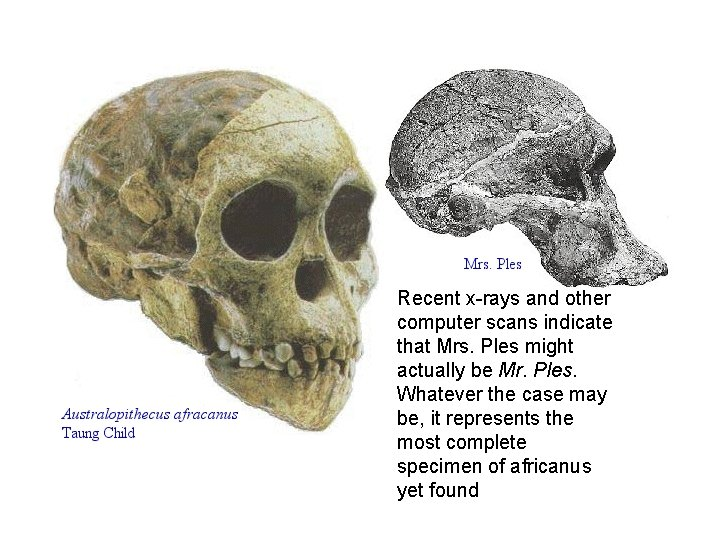 Recent x-rays and other computer scans indicate that Mrs. Ples might actually be Mr.