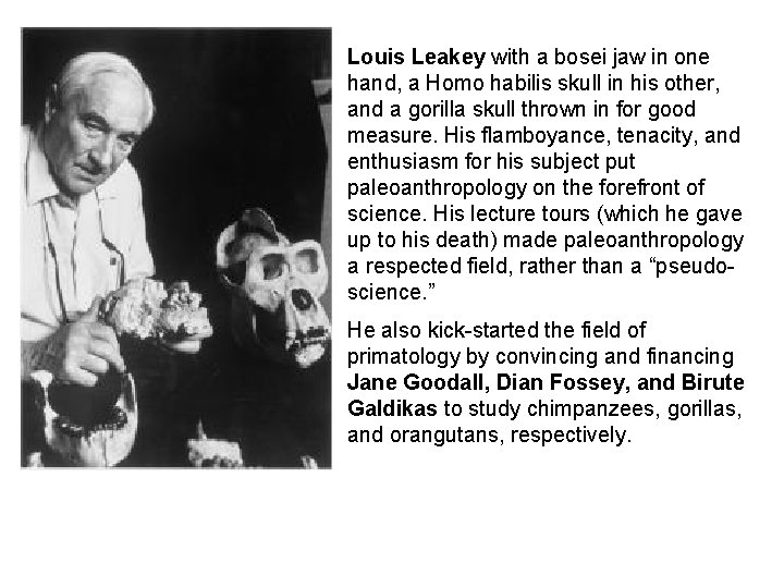 Louis Leakey with a bosei jaw in one hand, a Homo habilis skull in