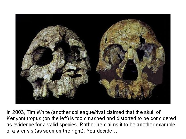 In 2003, Tim White (another colleague/rival claimed that the skull of Kenyanthropus (on the