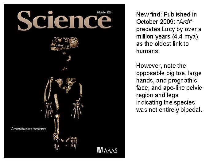 """New find: Published in October 2009: """"Ardi"""" predates Lucy by over a million years"""
