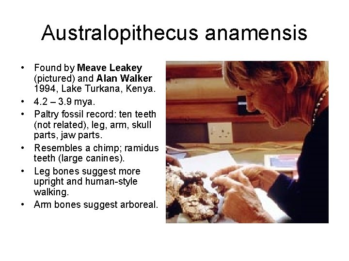 Australopithecus anamensis • Found by Meave Leakey (pictured) and Alan Walker 1994, Lake Turkana,