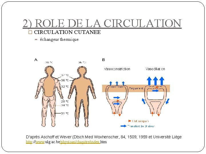 2) ROLE DE LA CIRCULATION � CIRCULATION CUTANEE = échangeur thermique D'après Aschoff et