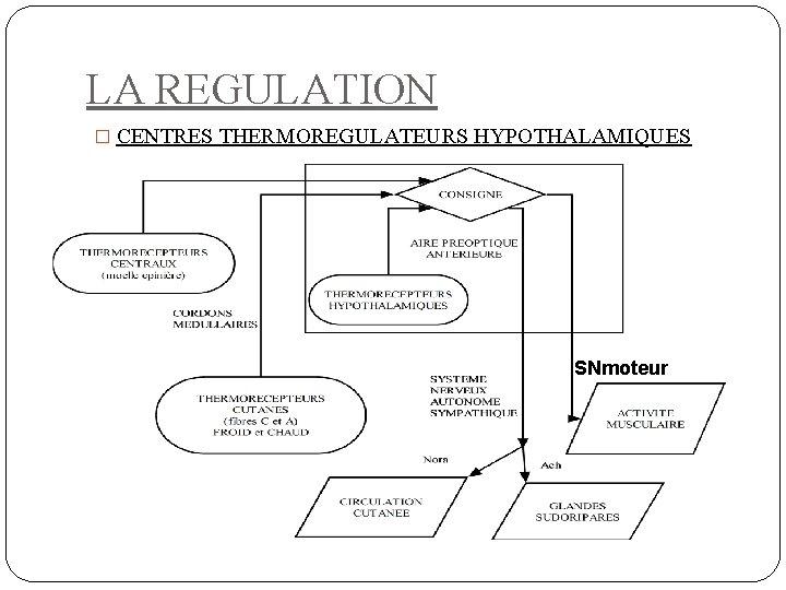 LA REGULATION � CENTRES THERMOREGULATEURS HYPOTHALAMIQUES SNmoteur
