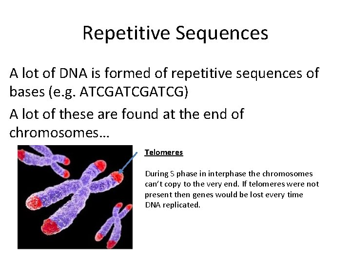 Repetitive Sequences A lot of DNA is formed of repetitive sequences of bases (e.