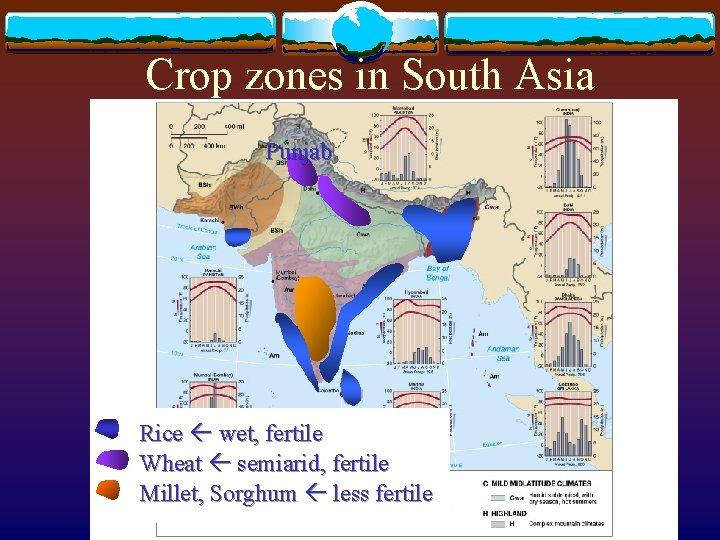 Crop zones in South Asia Punjab Rice wet, fertile Wheat semiarid, fertile Millet, Sorghum