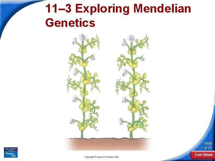 11– 3 Exploring Mendelian Genetics 11 -3 Exploring Mendelian Genetics Slide 1 of 31