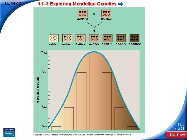 11– 3 Exploring Mendelian Genetics Aa. Bb. Cc aabbcc Aa. Bb. Cc Aa. Bbcc