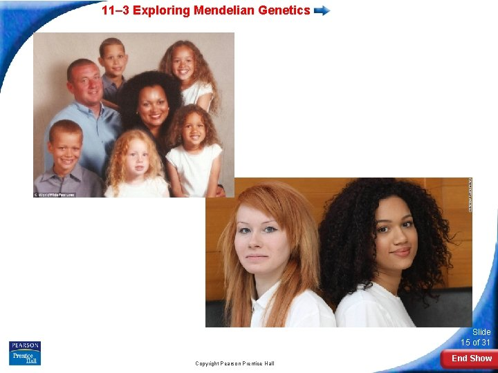 11– 3 Exploring Mendelian Genetics Slide 15 of 31 Copyright Pearson Prentice Hall End