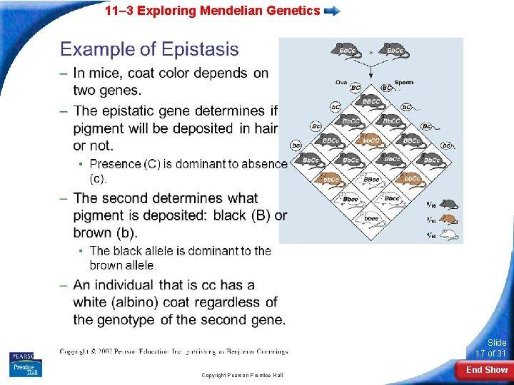 11– 3 Exploring Mendelian Genetics Slide 17 of 31 Copyright Pearson Prentice Hall End