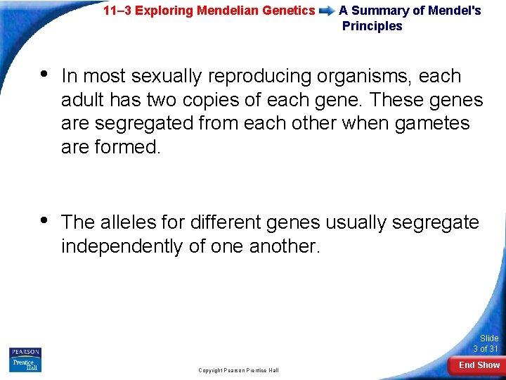 11– 3 Exploring Mendelian Genetics A Summary of Mendel's Principles • In most sexually