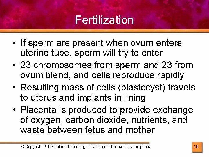 Fertilization • If sperm are present when ovum enters uterine tube, sperm will try