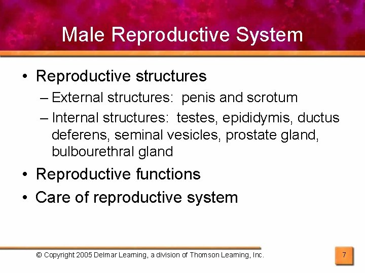 Male Reproductive System • Reproductive structures – External structures: penis and scrotum – Internal