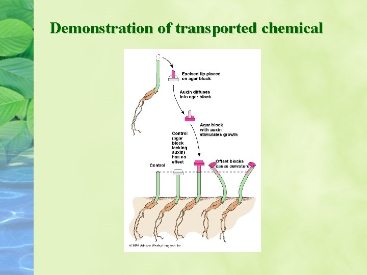 Demonstration of transported chemical