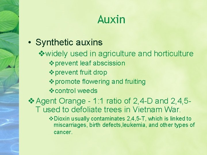 Auxin • Synthetic auxins widely used in agriculture and horticulture prevent leaf abscission prevent