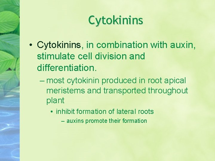 Cytokinins • Cytokinins, in combination with auxin, stimulate cell division and differentiation. – most