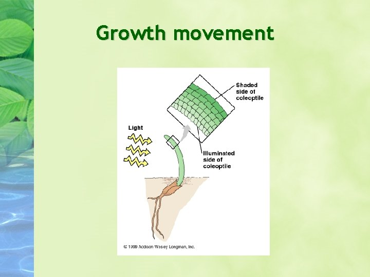 Growth movement