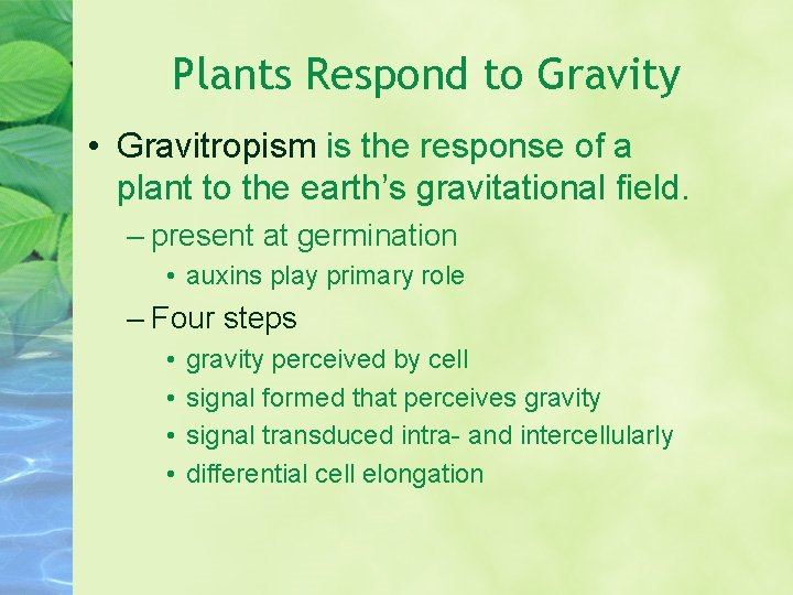 Plants Respond to Gravity • Gravitropism is the response of a plant to the
