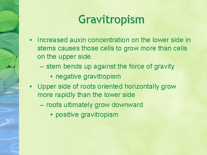 Gravitropism • Increased auxin concentration on the lower side in stems causes those cells