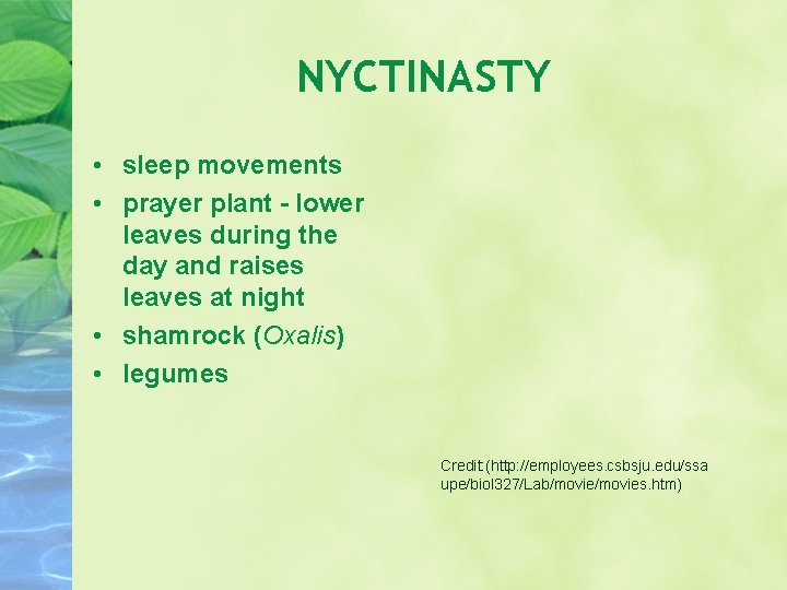 NYCTINASTY • sleep movements • prayer plant - lower leaves during the day and