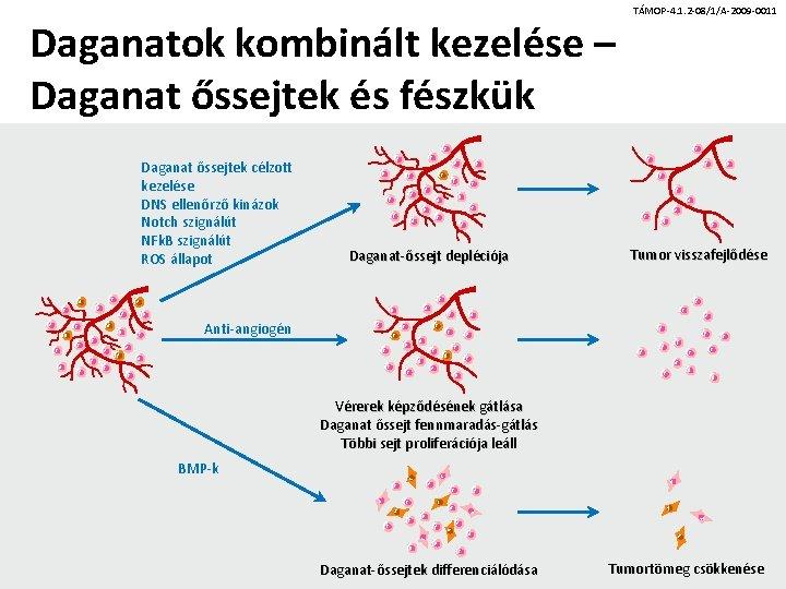 Őssejtek és krónikus prosztatagyulladás