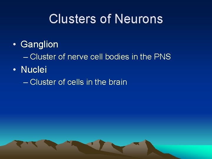 Clusters of Neurons • Ganglion – Cluster of nerve cell bodies in the PNS