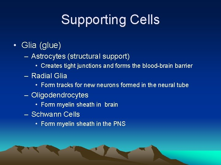 Supporting Cells • Glia (glue) – Astrocytes (structural support) • Creates tight junctions and