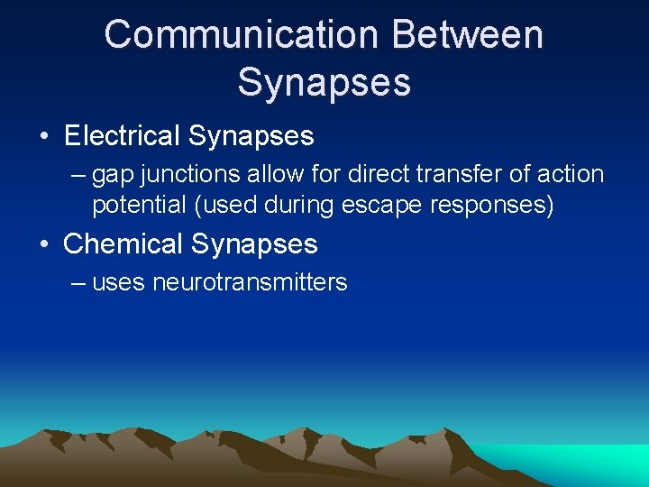 Communication Between Synapses • Electrical Synapses – gap junctions allow for direct transfer of