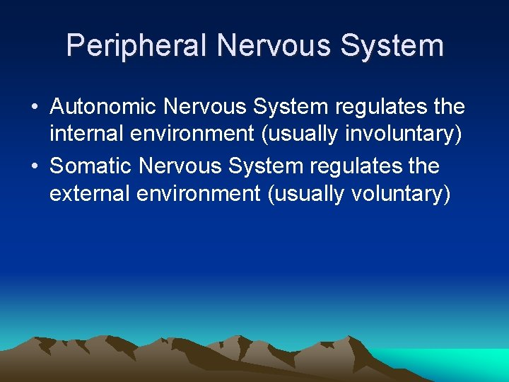 Peripheral Nervous System • Autonomic Nervous System regulates the internal environment (usually involuntary) •