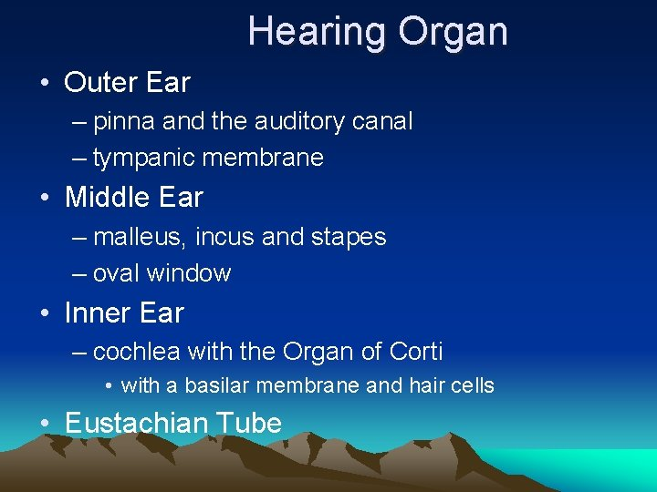Hearing Organ • Outer Ear – pinna and the auditory canal – tympanic membrane