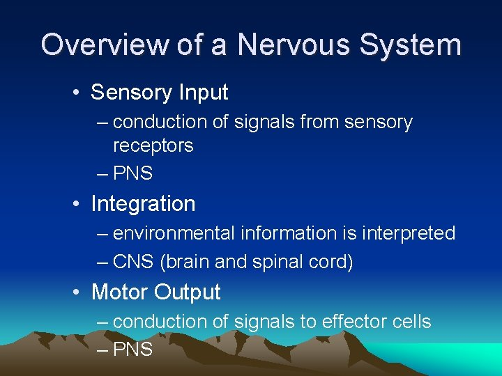 Overview of a Nervous System • Sensory Input – conduction of signals from sensory