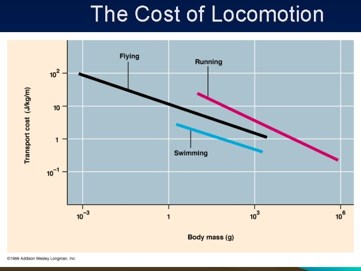 The Cost of Locomotion