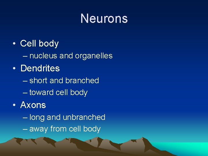Neurons • Cell body – nucleus and organelles • Dendrites – short and branched