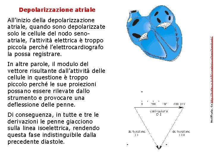 Depolarizzazione atriale All'inizio della depolarizzazione atriale, quando sono depolarizzate solo le cellule del nodo