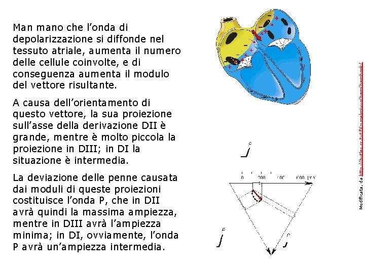 A causa dell'orientamento di questo vettore, la sua proiezione sull'asse della derivazione DII è