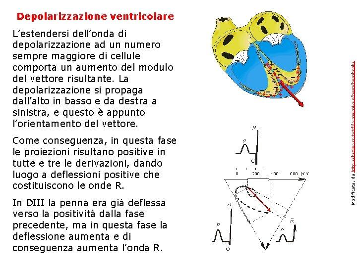 Depolarizzazione ventricolare L'estendersi dell'onda di depolarizzazione ad un numero sempre maggiore di cellule comporta