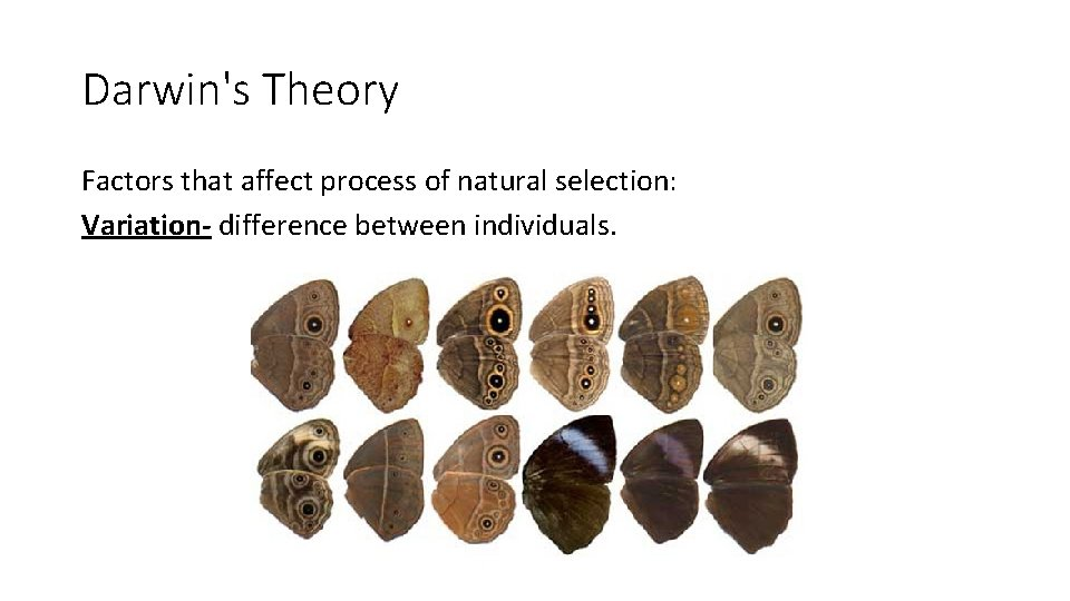 Darwin's Theory Factors that affect process of natural selection: Variation- difference between individuals.